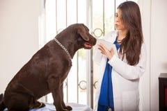 Ветеринар используя технологию Стоковая Фотография