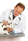 Ветеринар: Кот мужского ветеринара рассматривая Стоковая Фотография RF