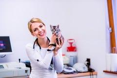 Ветеринар при стетоскоп держа маленького больного кота стоковая фотография rf