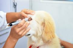 Ветеринар рассматривая милую собаку щенка Стоковая Фотография