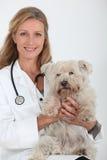 Ветеринар с малой собакой стоковые изображения