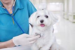 Ветеринар с собакой стоковая фотография rf