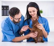 ветеринар Стоковая Фотография