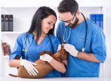 ветеринар Стоковое Изображение RF