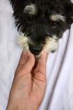 ветеринар Стоковое Фото