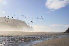 Ветерок океана Стоковое Изображение RF