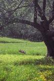 ветерок приятный Стоковое Фото