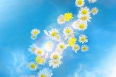 Ветерок яркого блеска bokeh маргаритки Стоковое Изображение RF