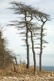 ветер бой Стоковое Фото