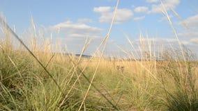 Ветер в траве видеоматериал