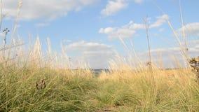 Ветер в траве акции видеоматериалы