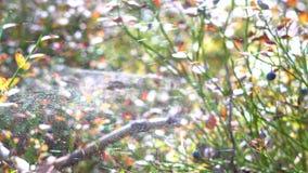 Ветер дует сеть в лесе сток-видео