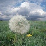 ветер дуновения Стоковое Изображение