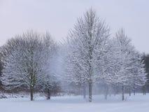Ветер деревьев снега Стоковое Изображение RF