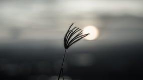 Ветер захода солнца Стоковое Фото
