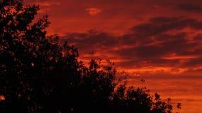 ветер захода солнца abstrakt сильный Стоковое Изображение RF