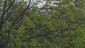 Ветер и дерево сток-видео
