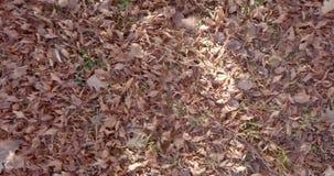Ветер листьев осени видеоматериал