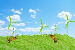Ветер муравея Стоковая Фотография RF