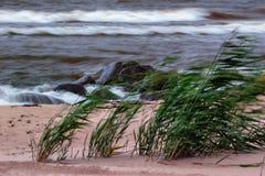 Ветер на пляже Стоковое Изображение RF