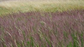 Ветер на траве видеоматериал