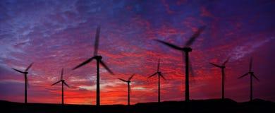 ветер силы завода Стоковое Фото