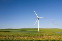 ветер силы завода Стоковые Изображения RF
