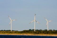 ветер силы завода Стоковые Фотографии RF