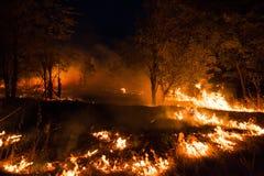 Ветер дуя на пламенеющих деревьях во время лесного пожара Стоковые Фотографии RF