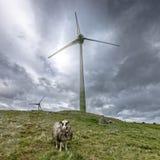 Ветер фермы и сиротливые овцы i Стоковое фото RF