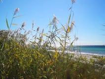 Ветер шевелит тростники на предпосылке красивого захода солнца видеоматериал