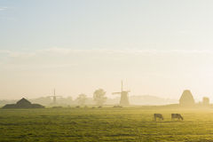 2 ветер Milla и 2 коровы Streefkerk Стоковые Фото