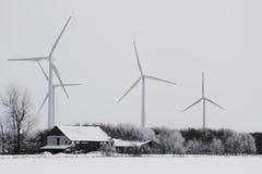 Ветреная зима стоковые фотографии rf