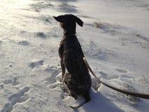 Ветреная прогулка зимы Стоковое Изображение RF