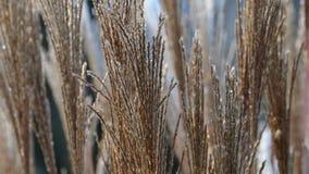 Ветреная трава цветка после дождя сток-видео