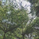 ветрено стоковая фотография rf