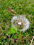 ветрено Стоковые Изображения