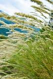ветрено Стоковое фото RF