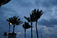 Ветреные ладони Стоковое Изображение RF