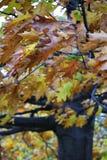 Ветреные листья Стоковое Изображение RF