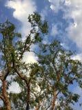 Ветреные дни Стоковая Фотография