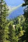 Ветреные пешие пути в лесе Стоковые Изображения RF