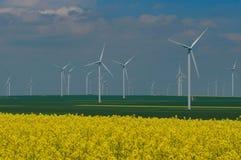Ветровая электростанция и канола Стоковые Изображения RF