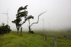 Ветровая электростанция и дунутые ветром деревья Стоковое Изображение RF