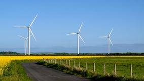 Ветрогенераторы на поле рапса. Стоковое Изображение