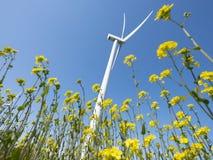 Ветротурбина против цветков голубого неба увиденных до конца желтых рапса стоковое изображение rf