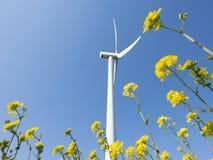 Ветротурбина против цветков голубого неба увиденных до конца желтых рапса стоковое изображение