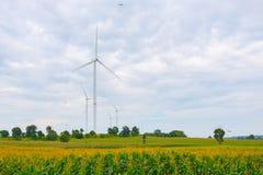 Ветротурбина сделала возобновляющую энергию на поле, голубом небе и предпосылке облака на Chaiyaphum Таиланде стоковая фотография