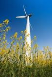 Ветротурбины в поле рапса стоковое фото