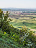 Ветротурбины на верхних частях холма с полевыми цветками Стоковые Фото